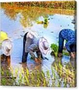 Planting Rice Canvas Print
