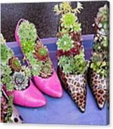 Plants In Pumps Canvas Print