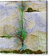 Plants In The Brick Wall Canvas Print