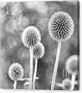 Plants In The Rain Canvas Print