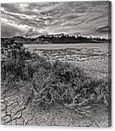 Plants On The Alvord Desert Canvas Print