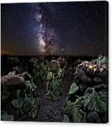 Plants Vs Milky Way Canvas Print