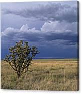 Plateau Cholla New Mexico Canvas Print