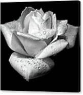 Platinum Rose Flower Canvas Print
