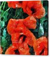 Playful Poppies 5 Canvas Print