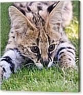 Playful Serval Canvas Print