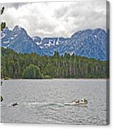 Playing In Colter Bay In Grand Teton National Park-wyoming Canvas Print