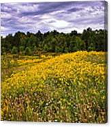 Pleasant Meadow Foreboding Sky Canvas Print