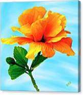 Pleasure - Yellow Double Hibiscus Canvas Print