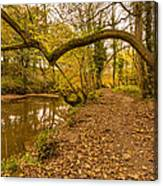 Plessey Woods Riverside Footpath Canvas Print