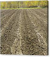 Plowed Spring Farmland Ready For Planting In Maine Canvas Print