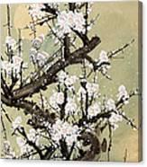 Plum Blossom Canvas Print