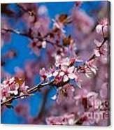 Plum Flowers And Honey Bee Canvas Print