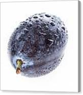 Plum With Water Drops On White Canvas Print