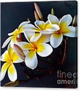 Plumeria Bouquet 2 Canvas Print