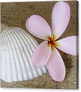 Plumeria Flower And Sea Shell Canvas Print
