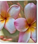 Plumeria Pair Canvas Print