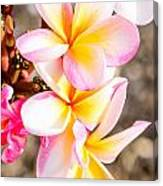 Plumerias Of Paradise 4 Canvas Print