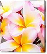 Plumerias Of Paradise 6 Canvas Print