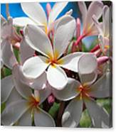 Plumerias Under A Blue Sky Canvas Print