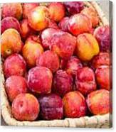 Plums In A Basket Canvas Print