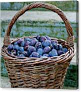 Plums In A Basket, Southern Bohemia Canvas Print