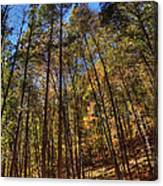 Pocono Trees Canvas Print