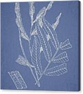 Poecilopteris Subrepanda Canvas Print