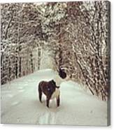 Pogo's First Snow Day Canvas Print