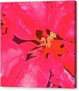 Poinsettia 1 Canvas Print