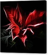 Poinsettia - Christmas Flower Canvas Print