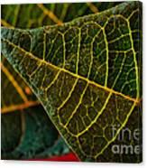 Poinsettia Green Leaf Canvas Print