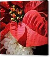 Poinsettia In Bloom Canvas Print