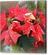 Poinsettia In Red And White Canvas Print