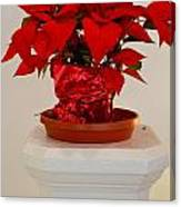 Poinsettia On A Pedestal No 1 Canvas Print