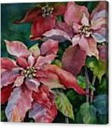 Poinsettia Pair Canvas Print
