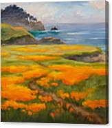 Point Lobos Poppies Canvas Print