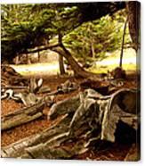 Point Lobos Whalers Cove Whale Bones Canvas Print