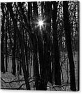 Point Of Light In Black And White Canvas Print