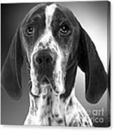 Pointer Dog Canvas Print