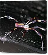 Points Of Contact - Spider - Orb Weaver Canvas Print