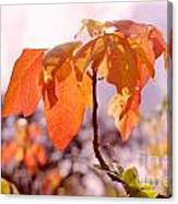 Poison Ivy Beauty Canvas Print