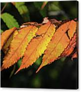 Poison Sumac Golden Kickoff To Fall Colors Canvas Print