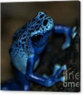 Poisonous Blue Frog 02 Canvas Print