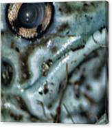 Poisonous Frog Eye Canvas Print