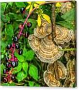 Poke And Bracket Fungi Canvas Print