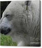 Polar Bear 4 Canvas Print