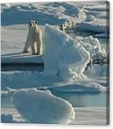 Polar Bear And Cub Canvas Print