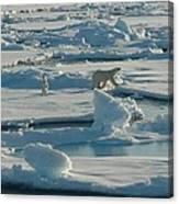 Polar Bear And Her Cub Canvas Print