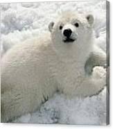 Polar Bear Cub Playing In Snow Alaska Canvas Print